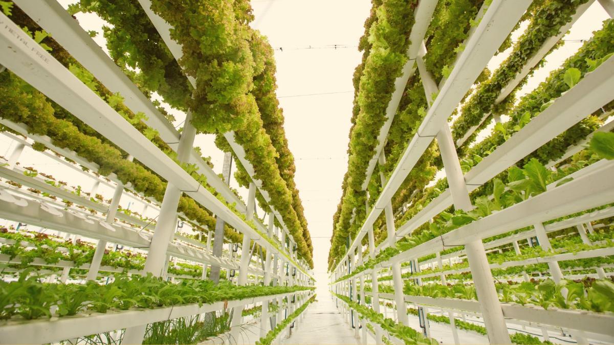 Vertical Farming: Zurück in die Zukunft
