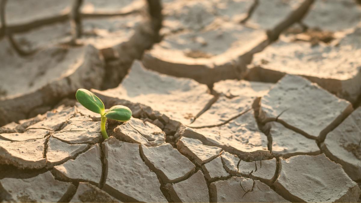 Klimaschutz bedeutet die ökologischen Grenzen des Planeten zu wahren