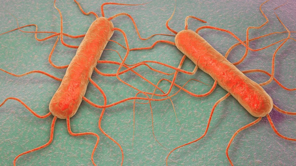 Salmonellen & Listerien: Vor diesen Produkten wird aktuell gewarnt