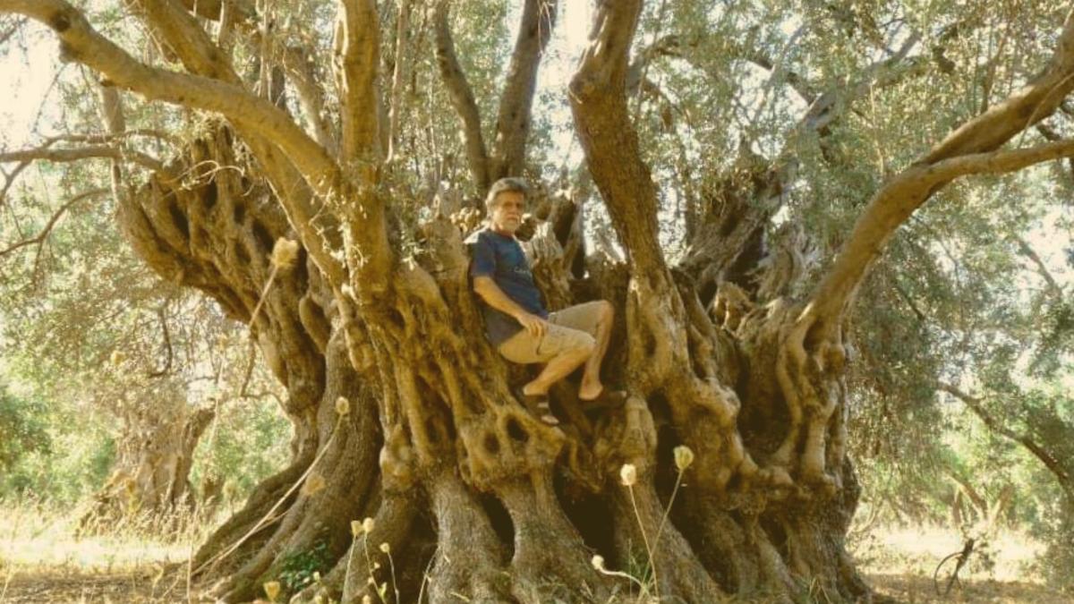Naturschatz verbrannt: Griechen trauern um 2.500 Jahre alten Baum