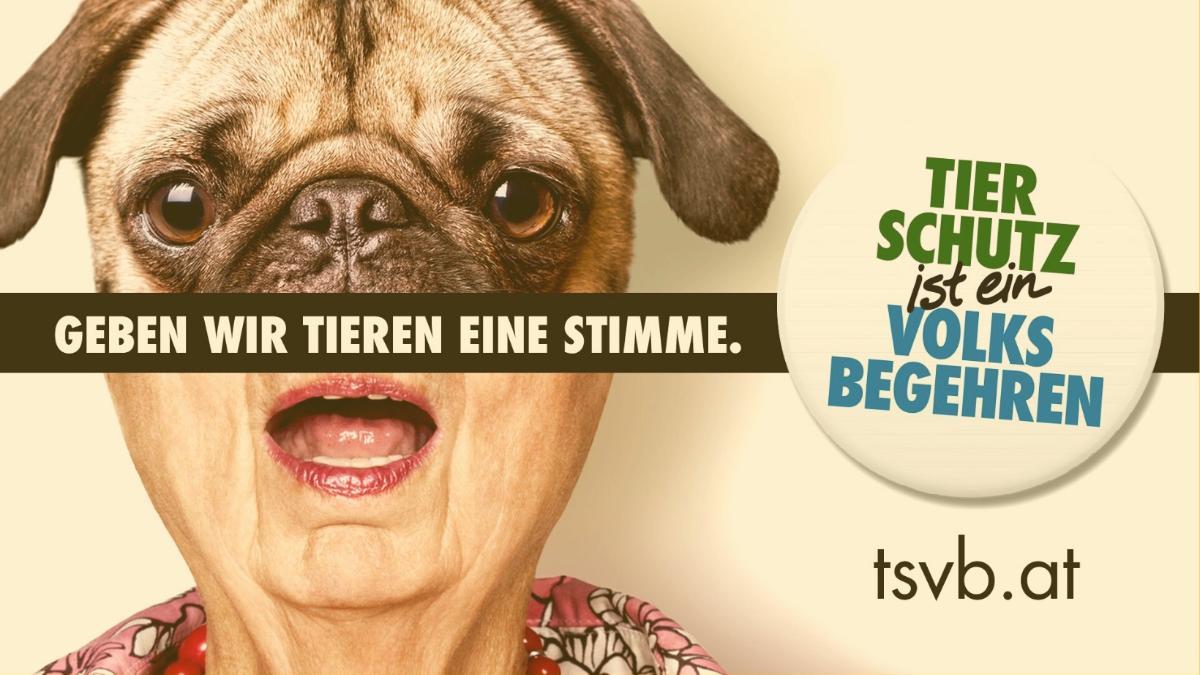 Preisgekrönt: Kampagne für Tierschutzvolksbegehren mehrfach ausgezeichnet!